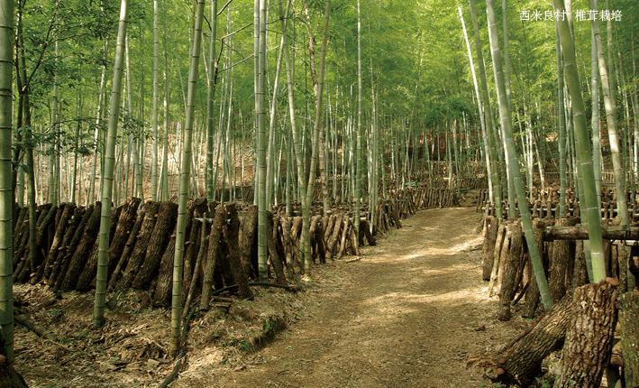 西米良村 椎茸栽培