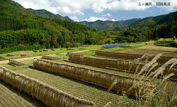 五ヶ瀬町 田園風景