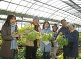 宮崎グリーンツーリズム 農業収穫